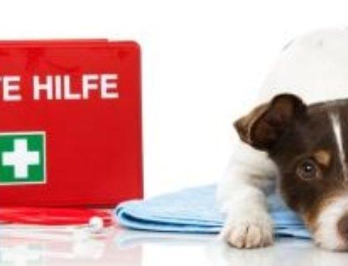 EVENT: Erste Hilfe am Hund mit Dr. Heidi Kloss am 9. Juni