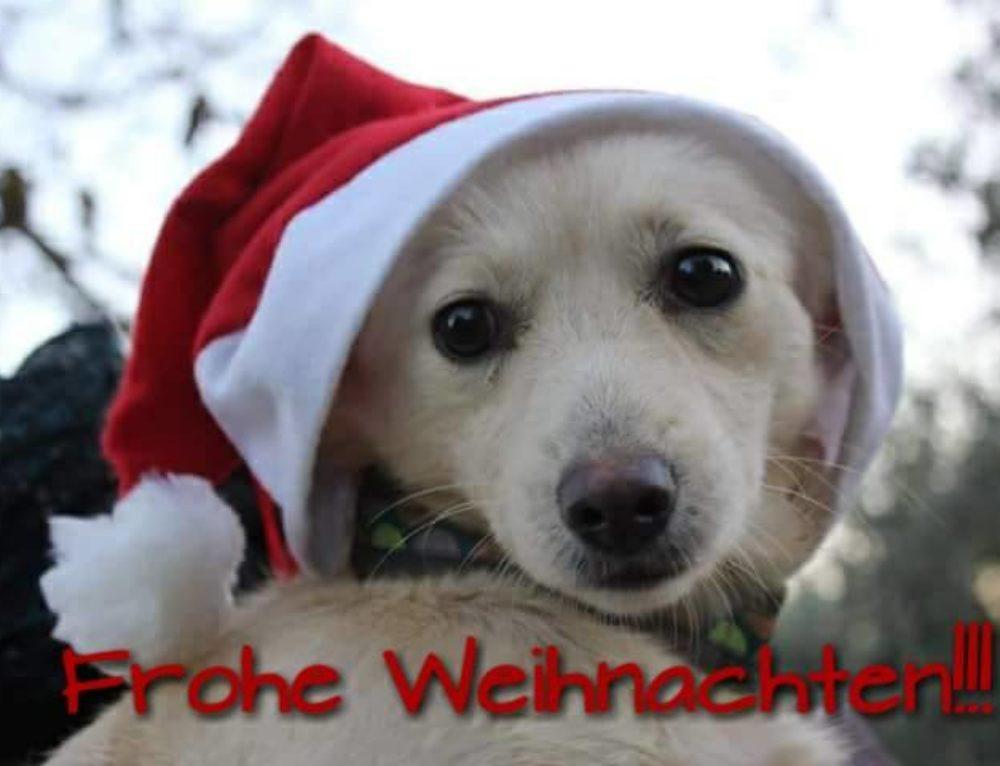 Frohe Weihnachten! :)