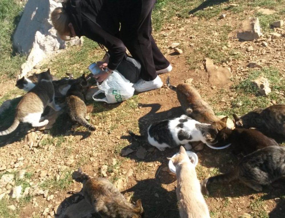 SPENDENAUFRUF: Kastration kroatischer Straßenkatzen
