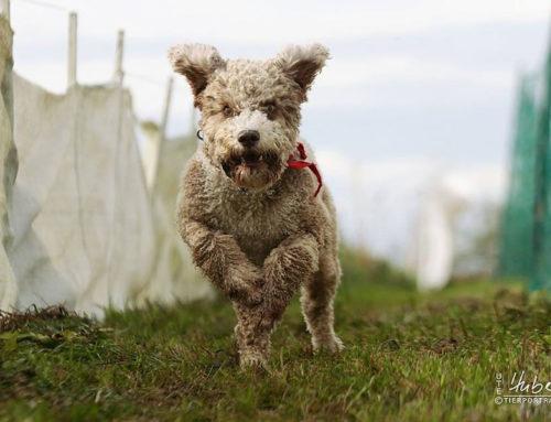 6. Schorndorfer Hundemesse am 3. Oktober