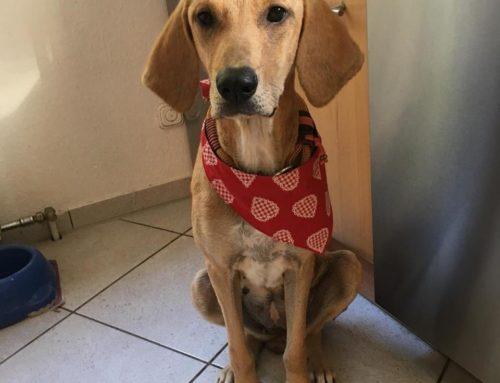 Hund des Monats November: VIDA