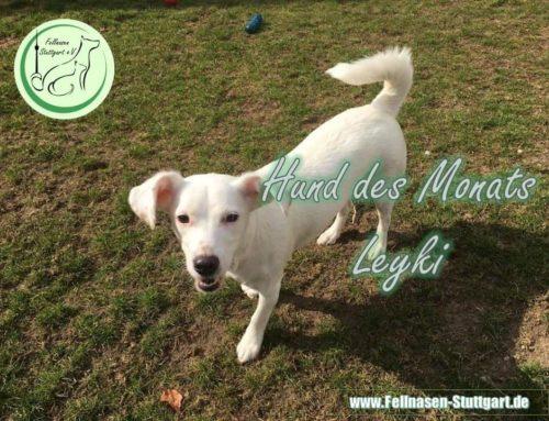 Hund des Monats März: Leyki