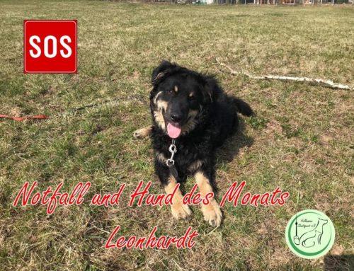 Hund des Monats April: Leonhardt