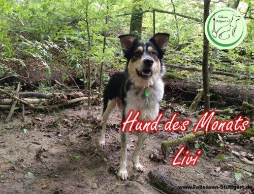Hund des Monats Juni: Livi