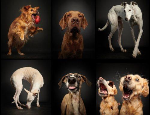 Charity Shooting für Hunde++ ausgebucht++