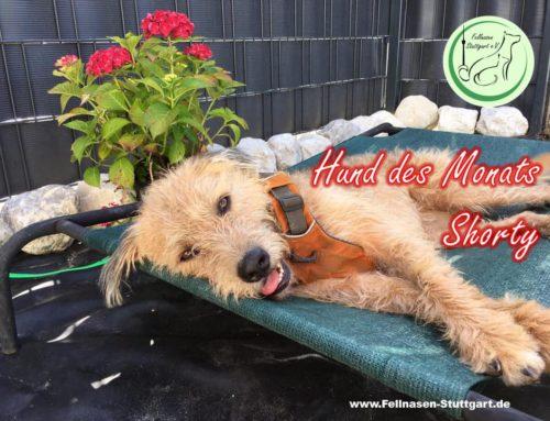 Hund des Monats Juli: Shorty+reserviert+