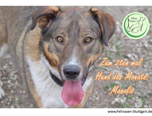 Hund des Monats Oktober: Manolis