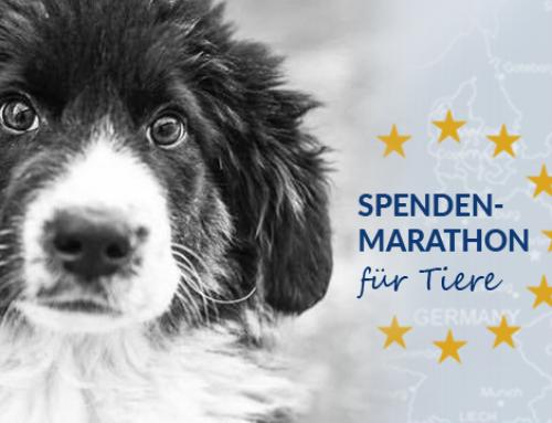 Futterspendenmarathon – jetzt abstimmen!