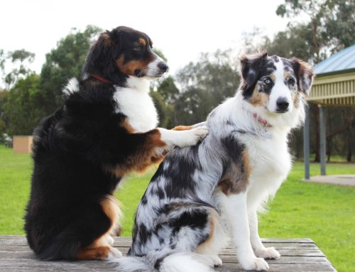 EVENT: Massage am Hund am 17. April