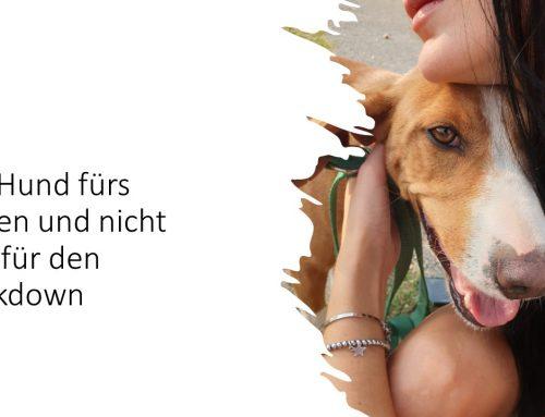 Corona sorgt für einen Hunde-Boom